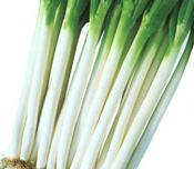 Scallions Green Onion